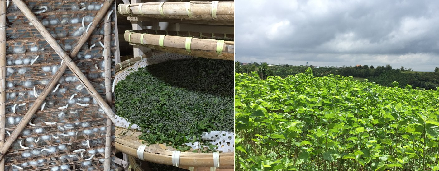 silk worm production process